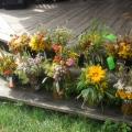 jezierzyce zioła